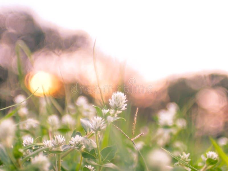 Campo con las flores de los wildflowers de la hierba salvaje durante luz del sol foto de archivo libre de regalías