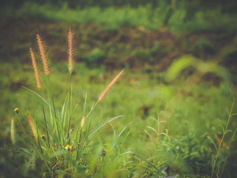 Campo con las flores de los wildflowers de la hierba salvaje durante luz del sol imágenes de archivo libres de regalías
