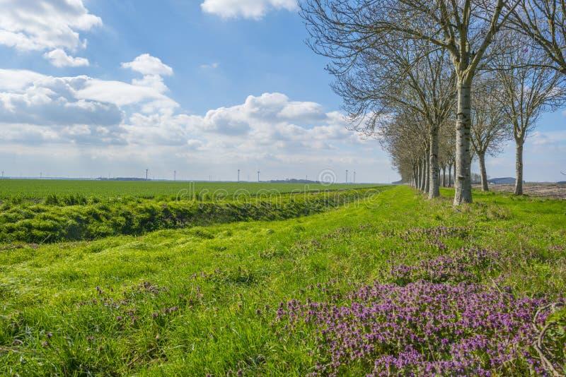 Campo con las flores en brote a lo largo de árboles debajo de un cielo azul imagenes de archivo
