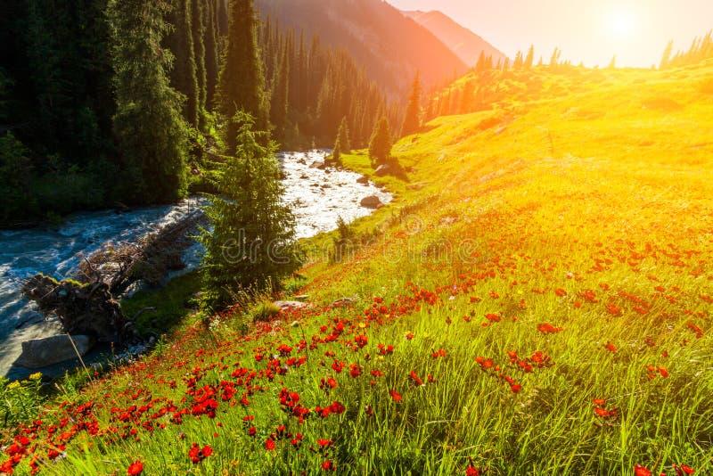 Campo con las flores en valle de la montaña Paisaje del verano durante puesta del sol fotos de archivo