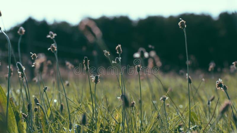 Campo con las flores, isla Holanda de Ameland wadden los Países Bajos foto de archivo libre de regalías