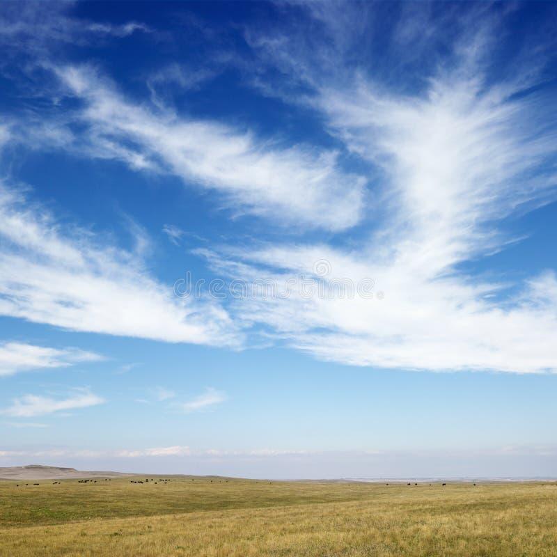 Campo con las nubes de cirro imagenes de archivo
