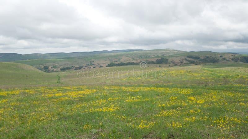 Campo con las pequeñas flores amarillas brillantes florecientes durante el florecimiento de la primavera Cielo con las nubes gran fotos de archivo
