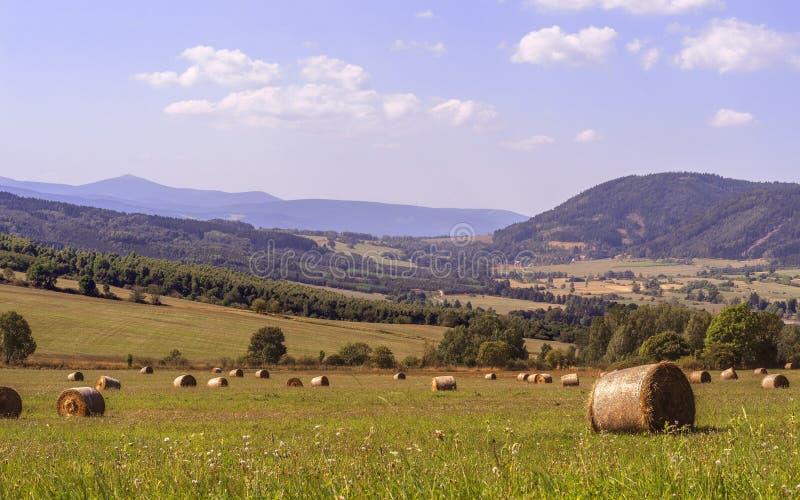 Campo con le balle rotonde di fieno contro lo sfondo delle montagne fotografia stock