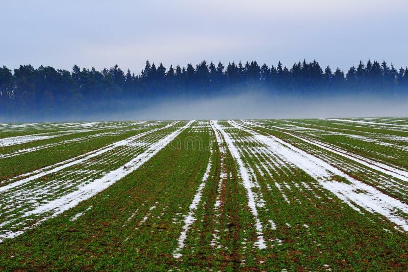 Campo con niebla en el bosque en invierno foto de archivo