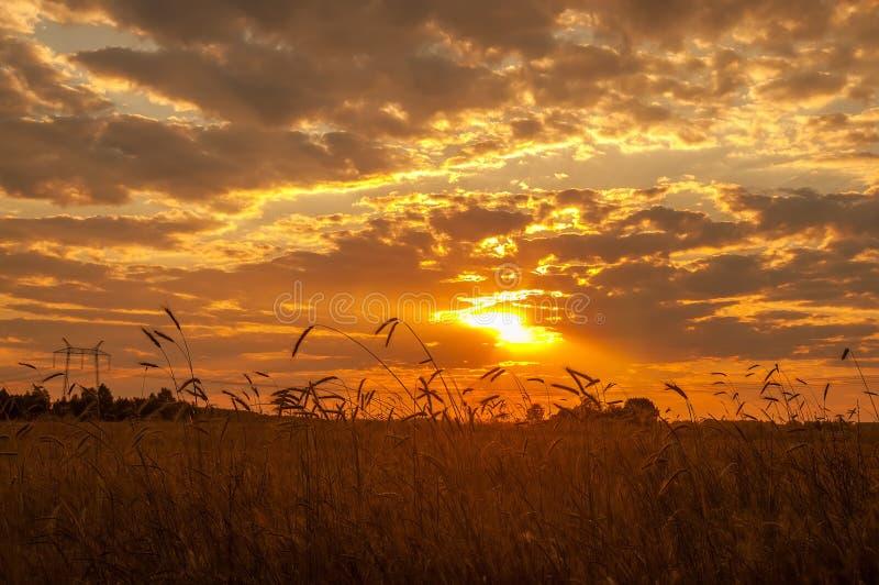 Campo con trigo en la puesta del sol Un cielo hermoso con los rayos del sol poniente, la extensión de campos imagen de archivo