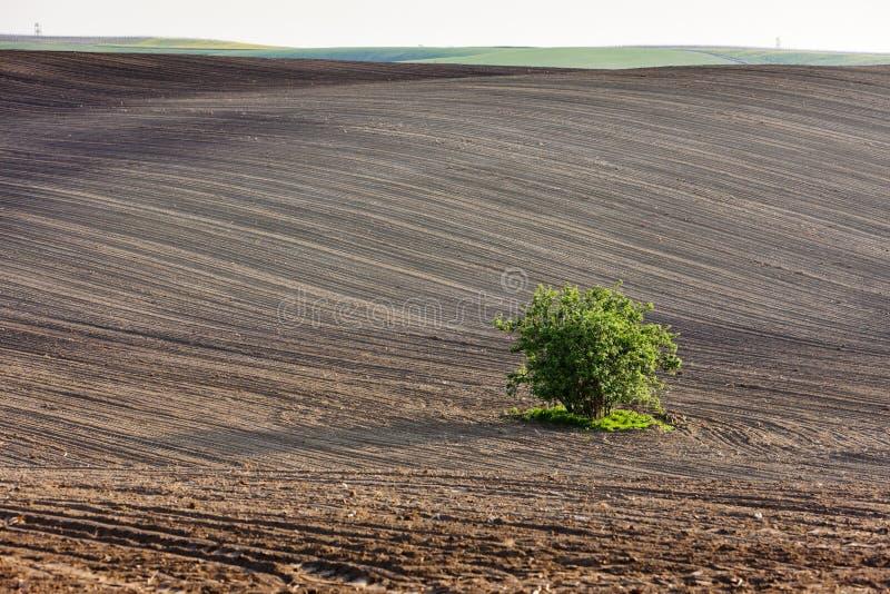 Campo con un albero fotografia stock