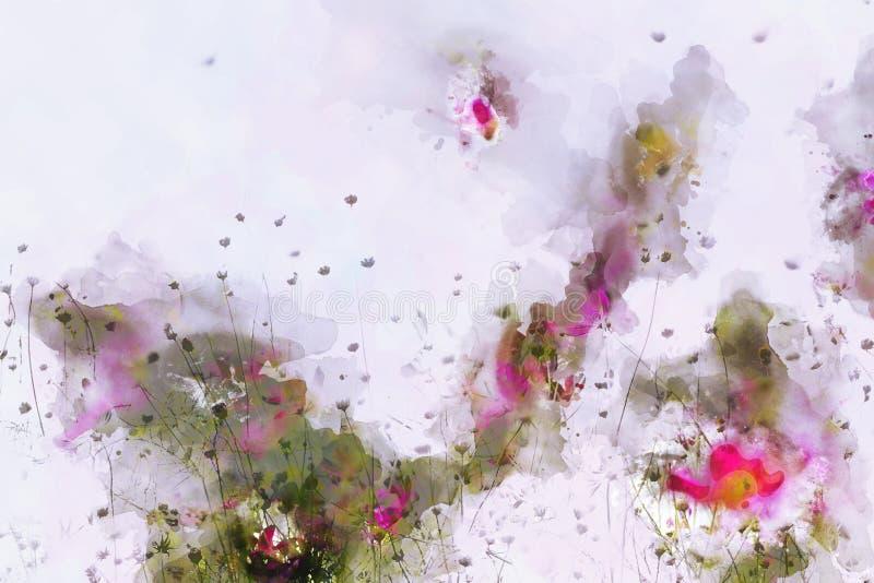 Campo cor-de-rosa do cosmos no fundo cor-de-rosa Pintura da aquarela de Digitas ilustração royalty free