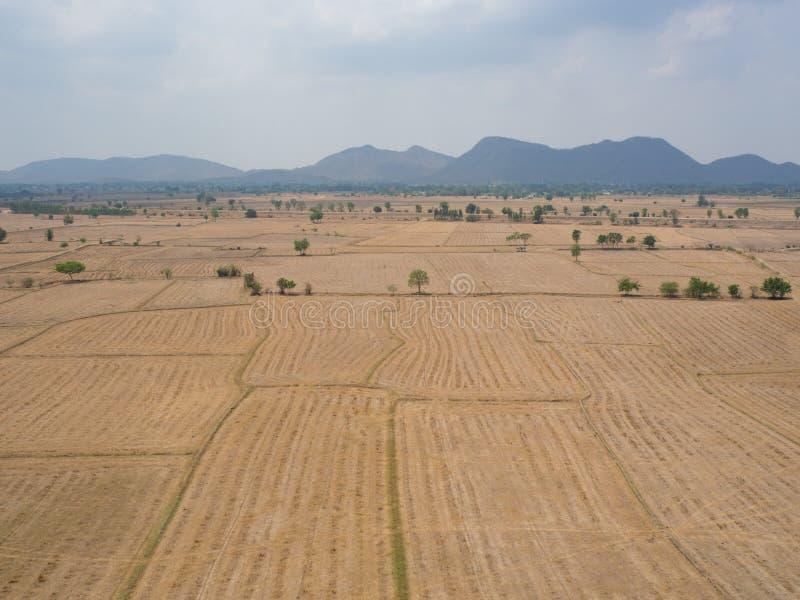 Campo cosechado del arroz fotografía de archivo libre de regalías