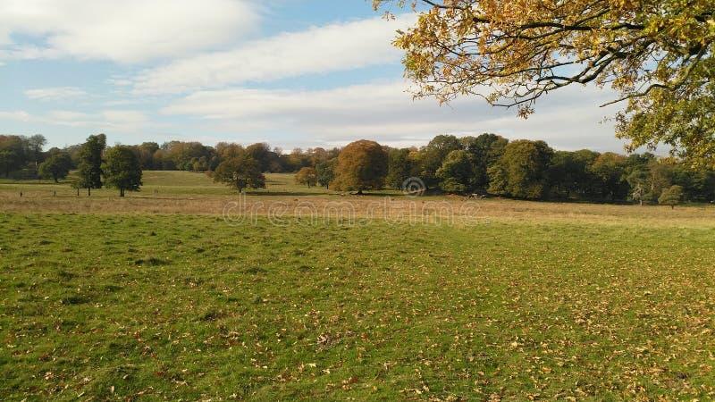 Campo cubierto en hojas con los árboles en la distancia fotografía de archivo libre de regalías