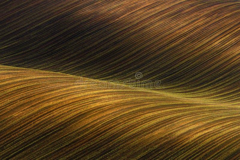 Campo cultivado acenado com o claro-escuro bonito das luz-sombras Paisagem rústica do outono em tons marrons Abst ondulado listra imagem de stock
