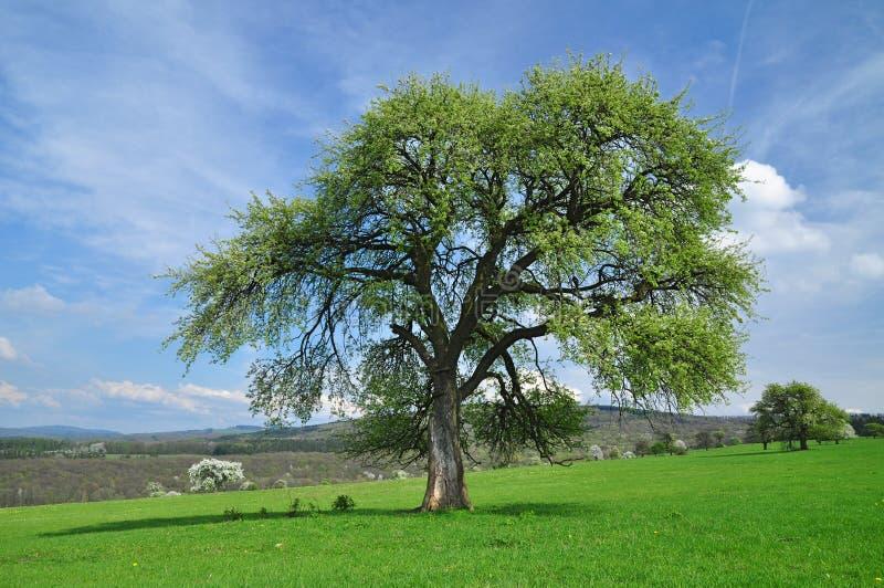 Campo da árvore fotografia de stock