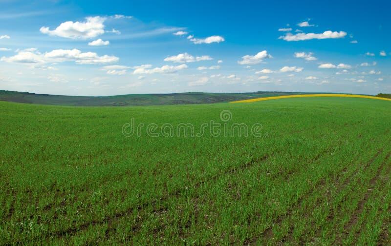 Campo da agricultura fotos de stock