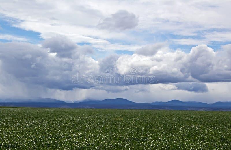 Download Campo Da Agricultura Sob Céus Tormentosos Imagem de Stock - Imagem de céu, paisagem: 26518831