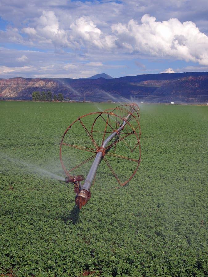 Download Campo da alfalfa foto de stock. Imagem de feno, verde - 26514398