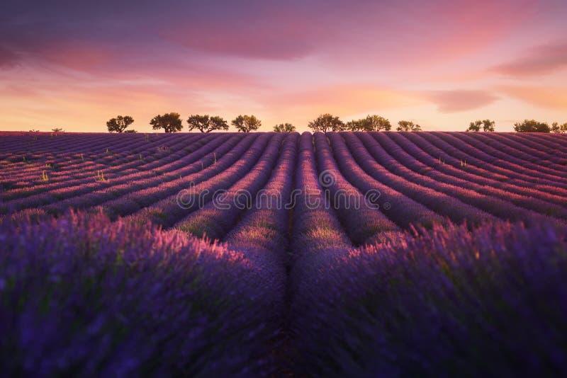Campo da alfazema em Provence durante o nascer do sol fotografia de stock royalty free