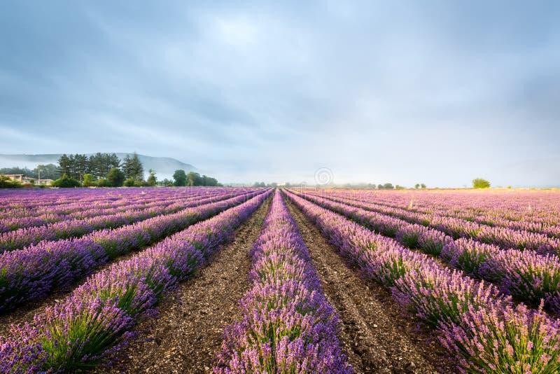 Campo da alfazema em Provence, France imagens de stock royalty free