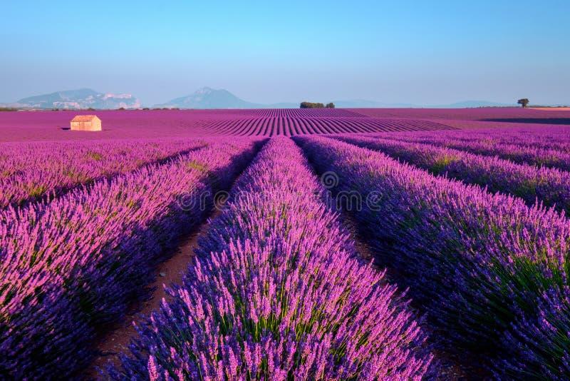 Campo da alfazema no sul de France fotos de stock