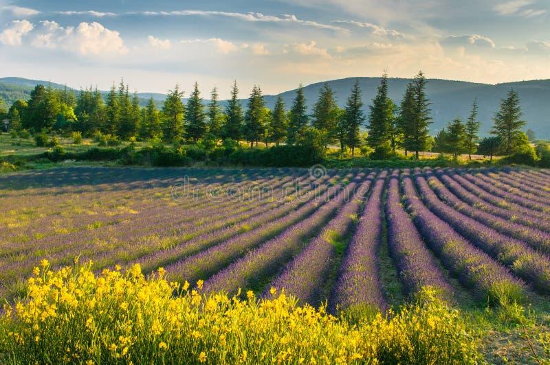 Campo da alfazema, Provence, France fotografia de stock