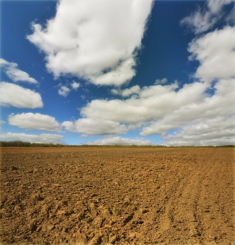 Campo da batata em um por do sol sob o céu imagens de stock royalty free