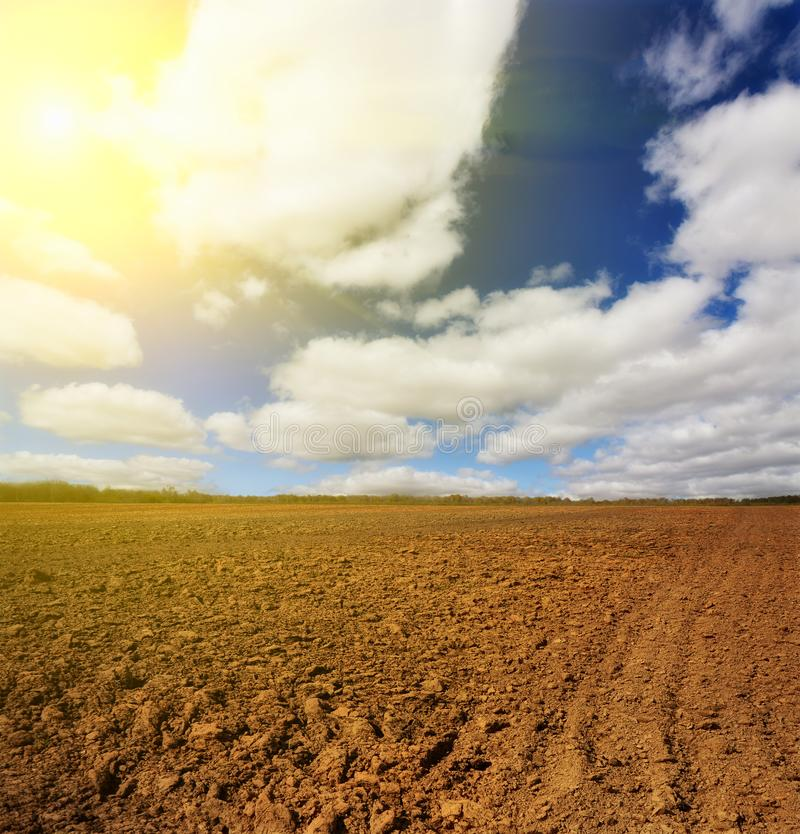 Campo da batata em um por do sol sob o c?u fotos de stock