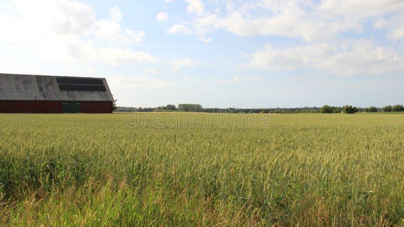 Campo da casa da quinta e de trigo com céu nebuloso imagens de stock royalty free