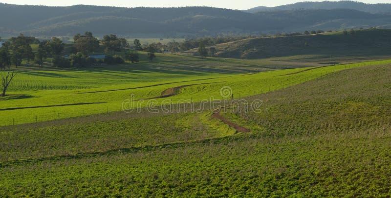Campo da colheita e pastagem imagem de stock royalty free