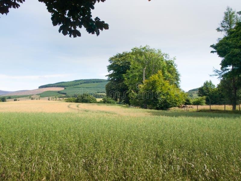 Campo da colheita em Glen Clova foto de stock royalty free