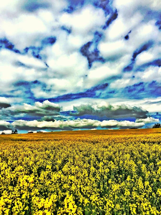 Campo da colza sob nuvens grossas imagem de stock royalty free