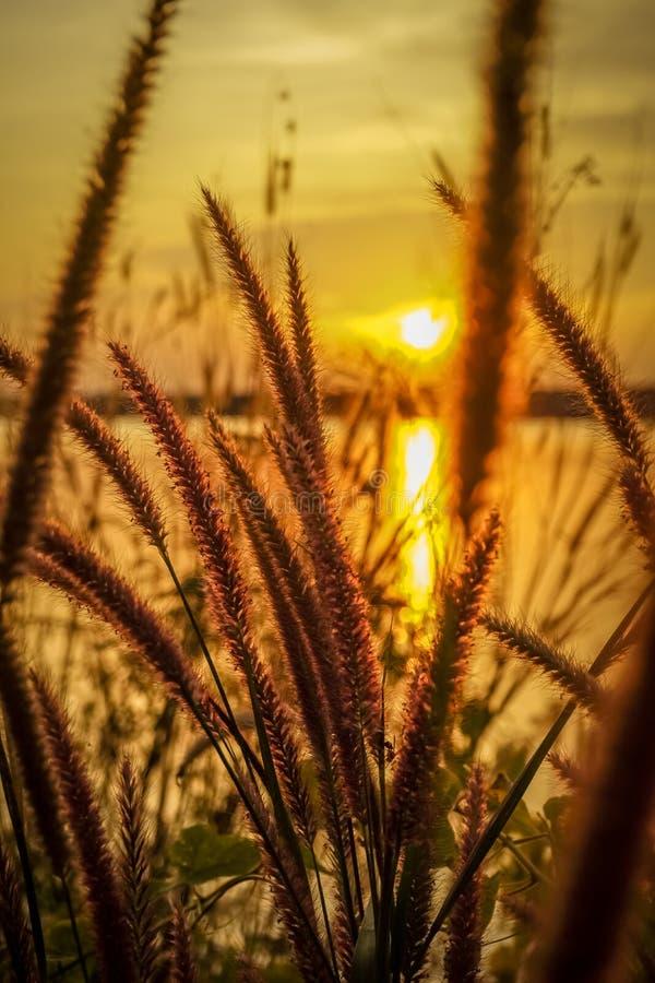 Campo da grama durante o por do sol com fundo do reservatório fotografia de stock