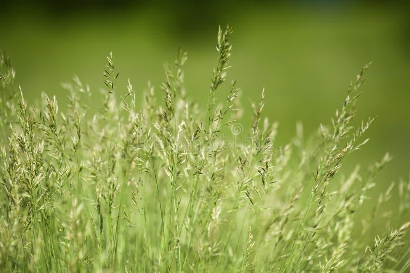 Campo da grama verde fotografia de stock
