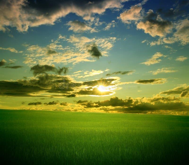 Campo da grama verde e do céu nebuloso azul fotos de stock royalty free