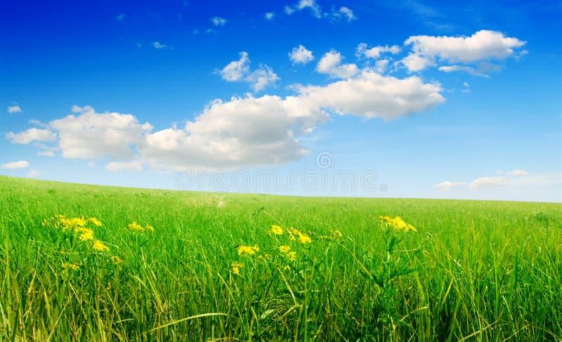 Campo da grama verde e do céu nebuloso azul fotos de stock