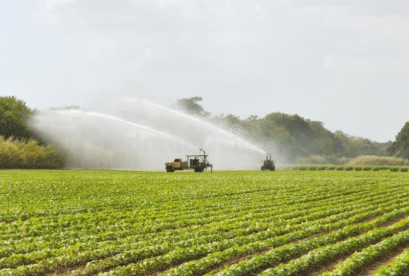 Campo da irrigação imagens de stock