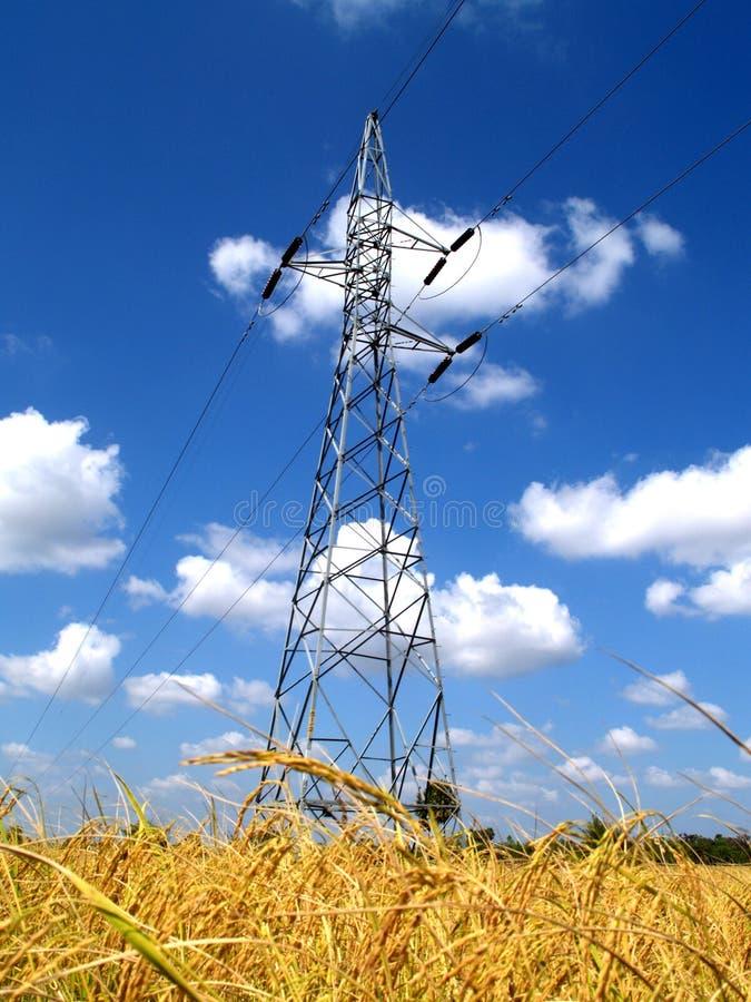 Campo da linha eléctrica e do arroz fotografia de stock