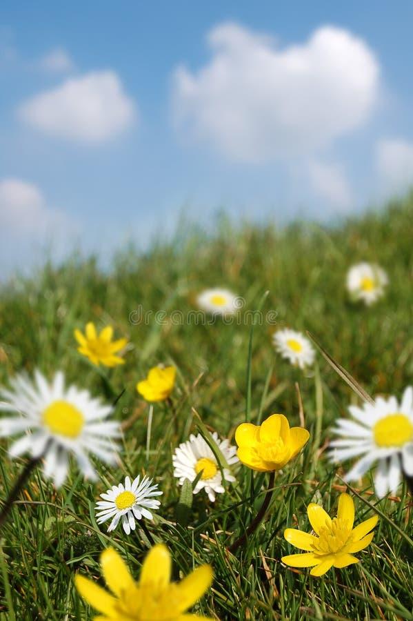 Campo da mola na flor imagens de stock royalty free