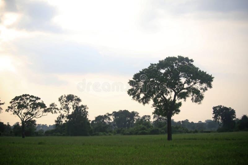 Campo da paisagem fotos de stock royalty free
