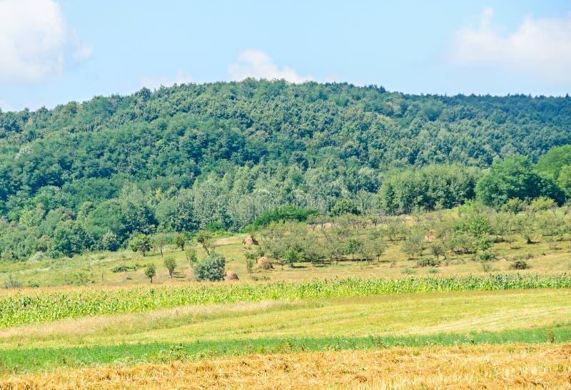 Campo da região Horezu com montes, florestas e fileds fotos de stock royalty free