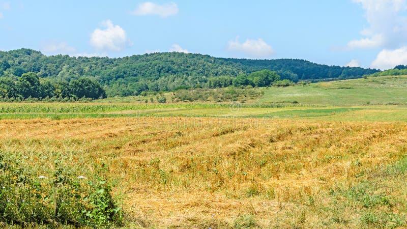 Campo da região Horezu com montes, florestas e fileds fotos de stock