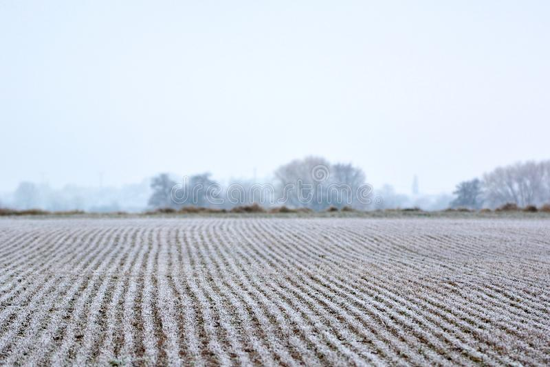 Campo da terra coberto na geada no início do inverno adiantado imagem de stock