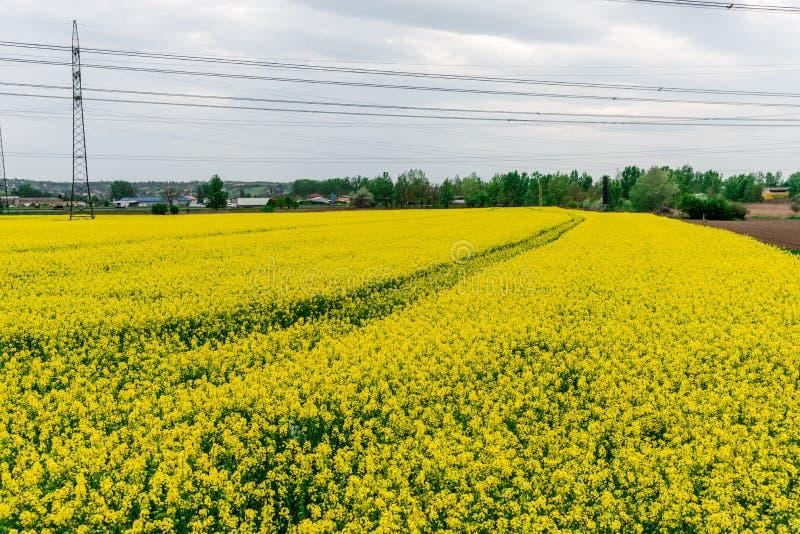 Campo da tulipa e moinhos velhos no netherland fotos de stock