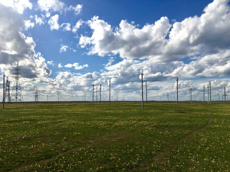 Campo da tulipa e os descansos da eletricidade com o céu nebuloso fotografia de stock royalty free