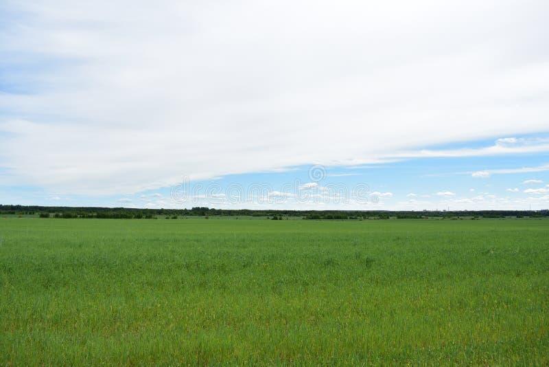 Campo da vila rural de nuvens do céu das colheitas do cereal fotografia de stock royalty free