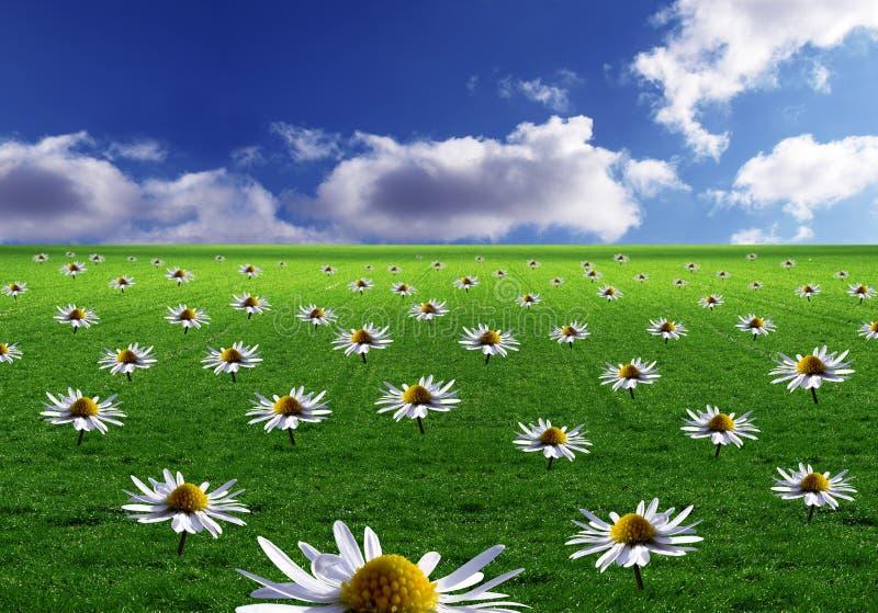 Campo das flores ilustração royalty free