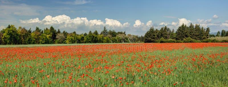 Campo das papoilas - Vaucluse - Provence França imagens de stock