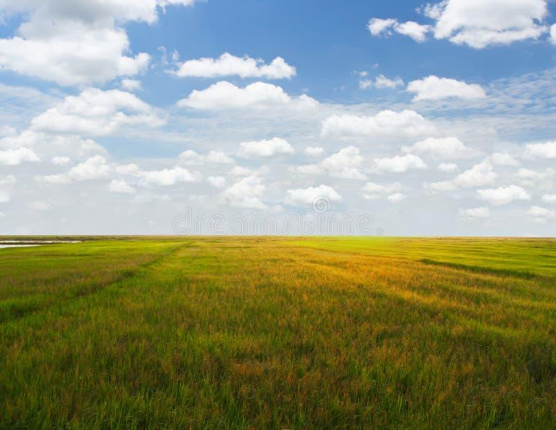 Campo de Addy com o céu azul bonito imagem de stock