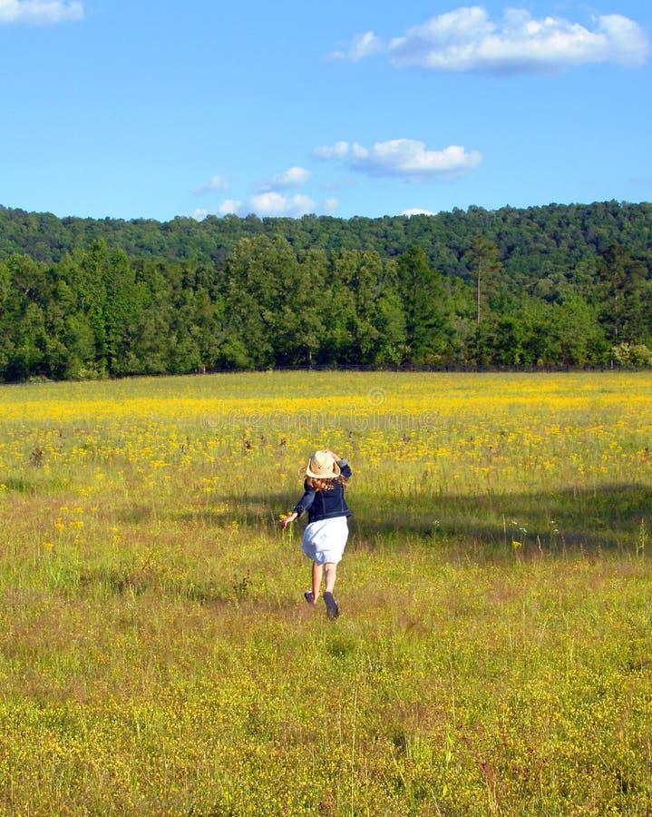 Campo de Alabama do amarelo imagem de stock
