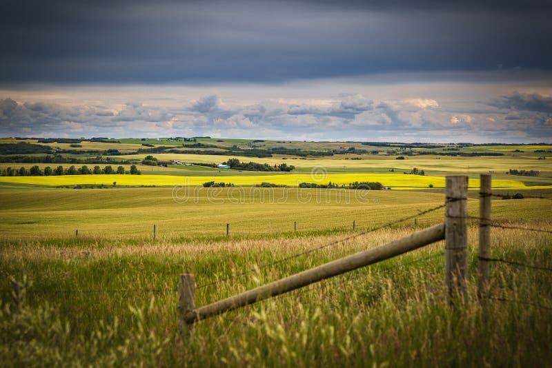 Campo de Alberta con el overrhead de las nubes de tormenta Campos amarillos del canola amarillo fotografía de archivo