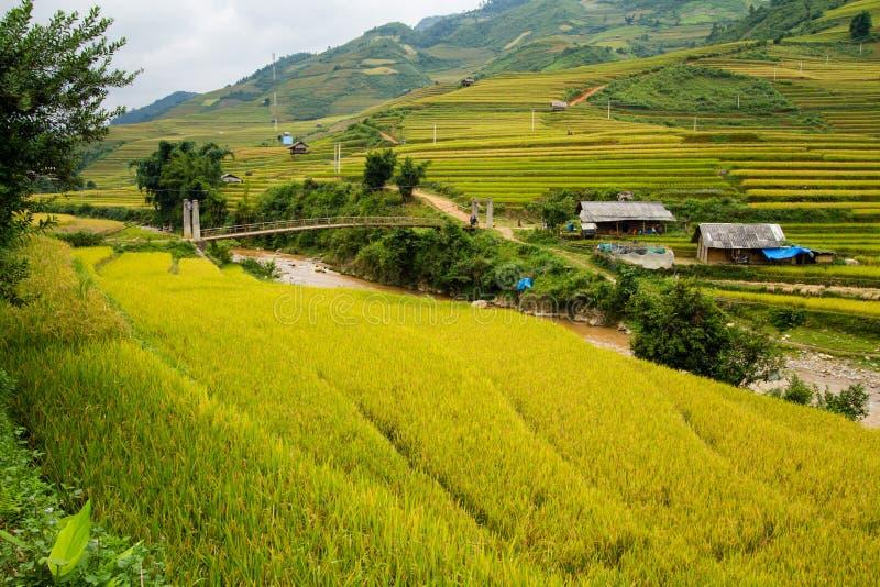 Campo de almofada do arroz imagens de stock