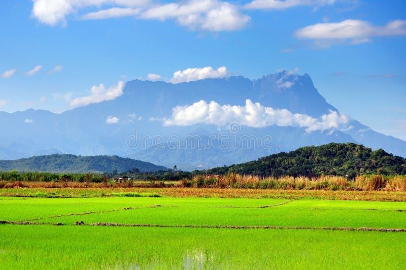 Campo de almofada e Mt Opinião de Kinabalu em Kota Belud, Sabah fotos de stock